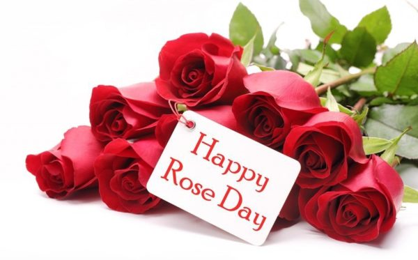 Happy Rose Day 2018 Whatsapp Status DP Sms Photo Profile Pic